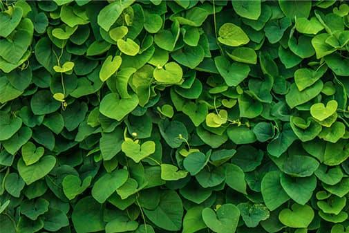 Gala Placidia - jardins suspendus